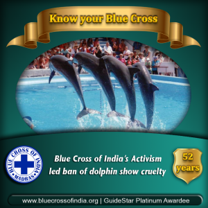 Blue of India Achievements: Animal in films and entertainment