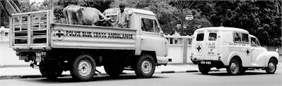 Activities of Blue Cross of India:  Ambulance in operation