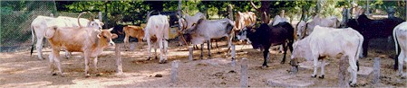 Activities of Blue Cross of India: Shelter for animals