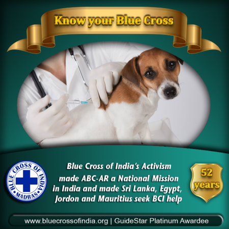Blue Cross of India - Animal Rescue, Hospital, Shelter & ABC