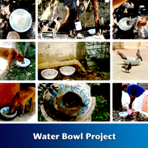 Water Bowl Project