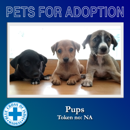Adopt - Blue Cross of India